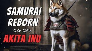 Akita Inu Facts: 10 Most Interesting Akita Facts