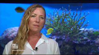 climate-change-is-killing-the-great-barrier-reef
