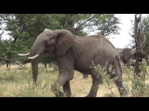 KENYA AND TANZANIA, 2016, my trip without music