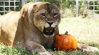 Big Cat Rescue on FREECABLE TV