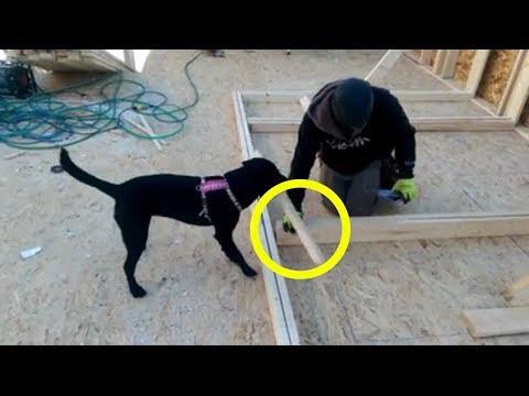 Amazing Smart Dog help a farmer Funny Videos You Must Watch