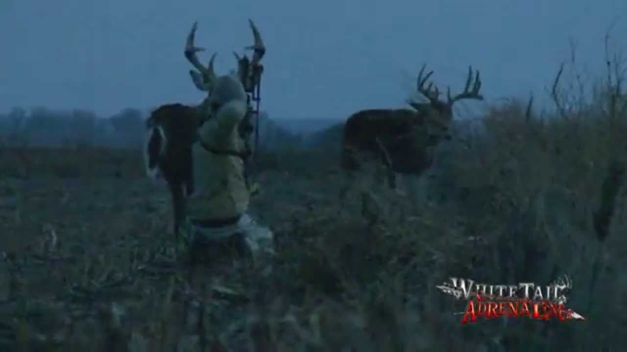 Land Of the Whitetail White tailed Deer Wildlife Video DVD Movie free download HD 720p