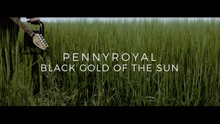 Pennyroyal - Black Gold Of The Sun (Official Video)