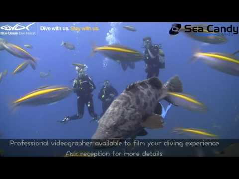 Blue Ocean Dive Resort - The true experience