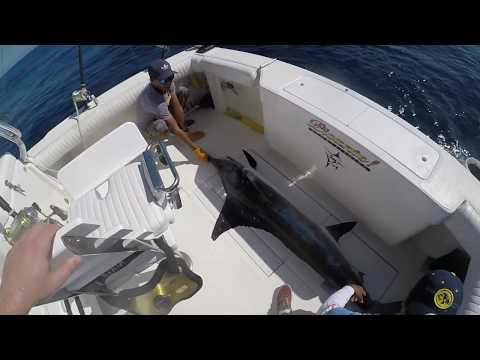 Marlin Fishing Cabo San Lucas