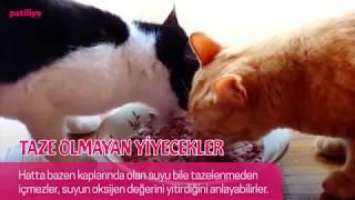 Kedilerin Nefret Ettiği 14 Şey