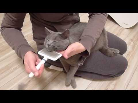 BALBINA, kot kartuski 10 m-cy (chartreux cat) - 7. CZESANIE