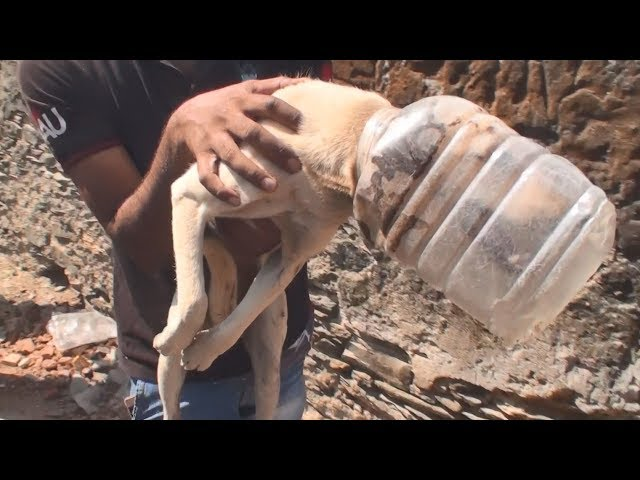 10 incredible rescues–you'll cry tears of joy