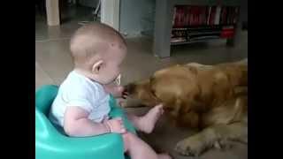 Дети и собаки приколы. Очень мило и смешно!