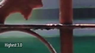 600D Magic Lantern Bitrate Comparison