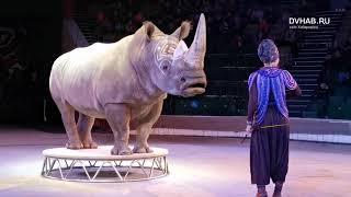 Хабаровский краевой цирк   новая программа Белое шоу