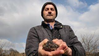 Posljednji lovac na žabe