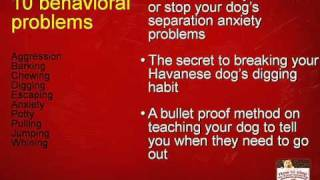 Havanese training secrets: how to train your Havanese dog
