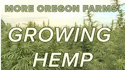 CBD boom boosts hemp farming in Oregon