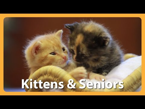These Kittens & Seniors Make The Most Adorable Pair