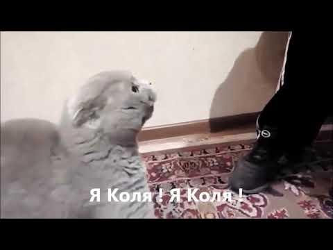 Кот говорит - я Коля!🐱