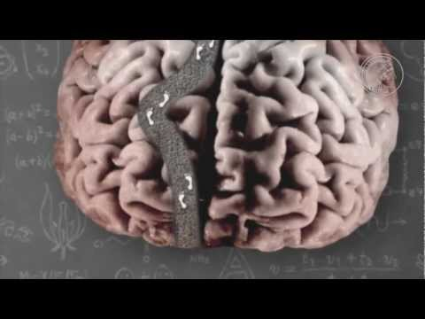 Synaptic plasticity - How synapses spark