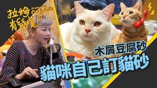 貓老弟愛吃貓砂?貼心貓哥親自訂天然貓砂|邵庭xPOPOLA|拉姆有幾噗 ☁