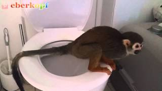 WOW! This Squirrel Monkey uses the Toilet like a Human
