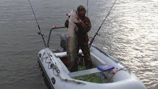 Поимка СОМА, борьба человека с сомом. ловля сома, рыбалка 2017 Харабали река Ахтуба