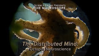 The Distributed Mind: Octopus Neurology