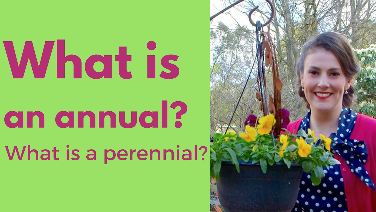 What is an annual plant what is a perennial plant the what is an annual plant what is a perennial plant the gardenettes izmirmasajfo