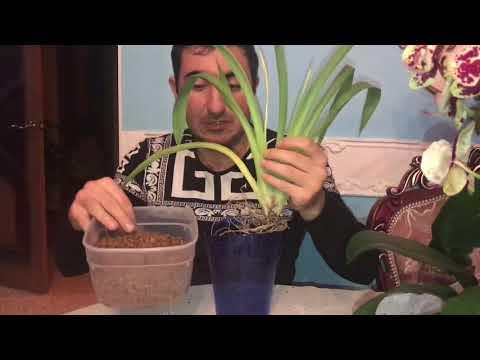 Вопрос: Какие из нижеперечисленных растений имеют корни?