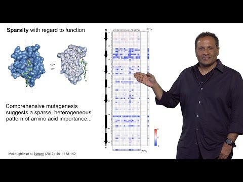 Rama Ranganathan (U. Texas Southwestern) Part 1: What is Protein Design?