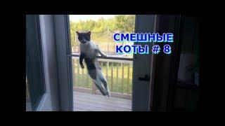 Приколы с кошками и котами #8. Подборка смешных и интересных видео с котиками и кошечками 2017