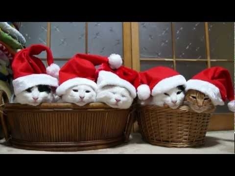 Thumbnail for Cat Video Santa Claus Cats