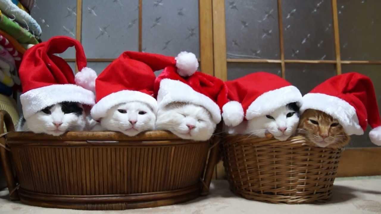 5匹のサンタ Santa Claus CAT