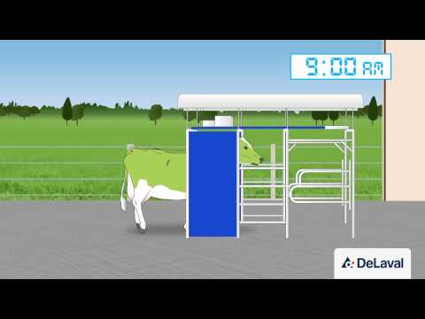 Robotic milking on grassland systems : Three Way Grazing_...