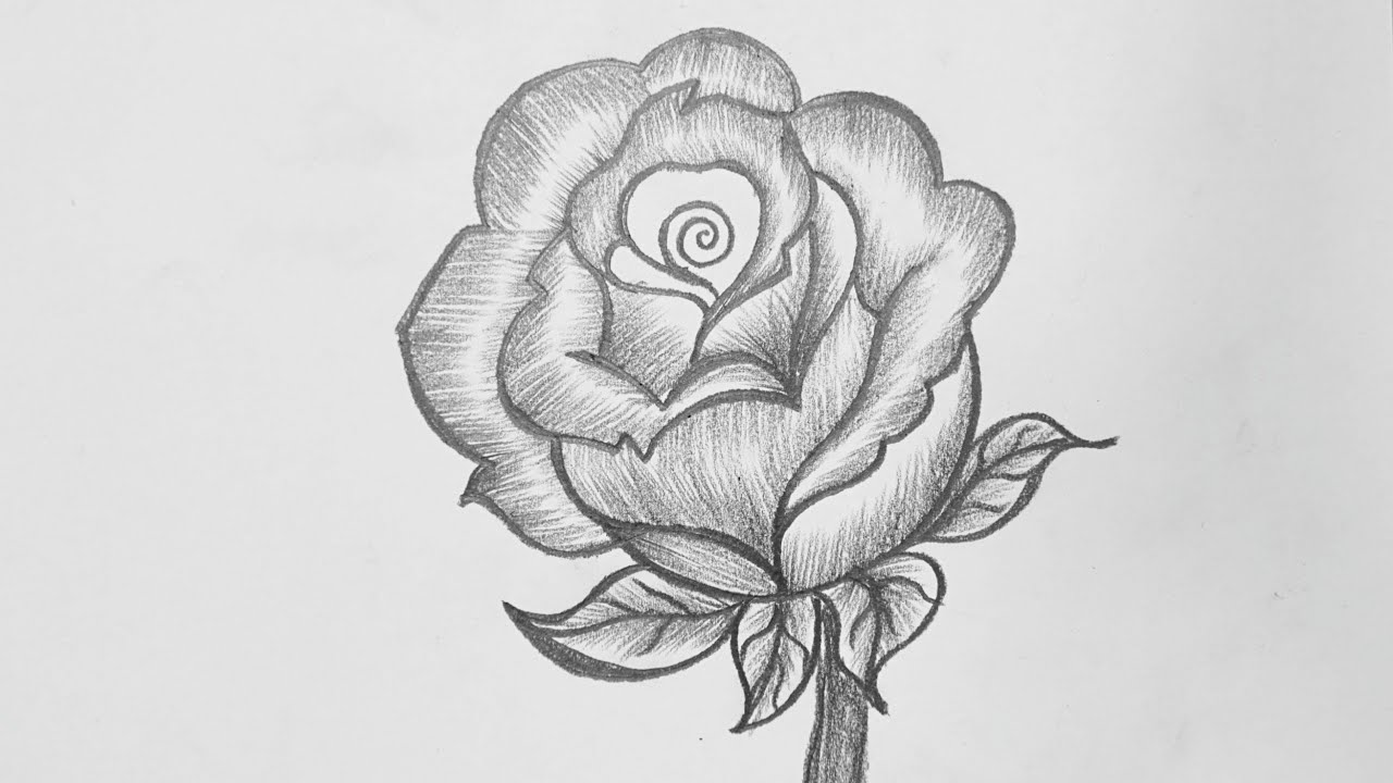 Pencil Drawing Rose Flower How To Draw Rose Pencil Drawing Easy Rose Pencil Drawing Youtube