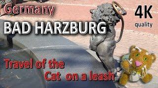 Bad Hazburg. Germany. Travel of the Cat on a leash