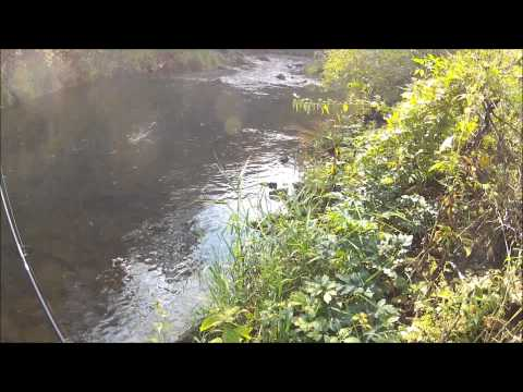 GoPro Trout Fishing the Driftless Area SE MN
