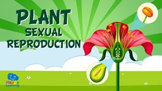 Plant sexual reproduction | Educational Video for Kids