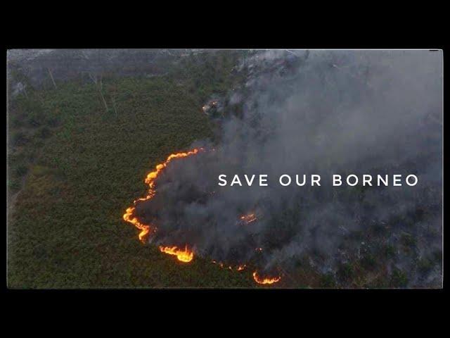 Kompilasi Video Kebakaran Hutan di Kalimantan Tengah & Selatan 14/09/2019, Ular Pun Mati Terpanggang