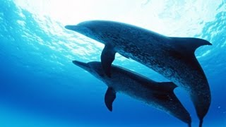 Virtual Dolphin Therapy 2 hours/Healing nature sounds