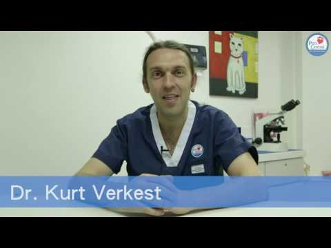 Ask The Vet: Why Cats Push objects off Tables - Pets ...
