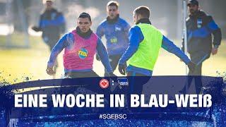 HAHOHE - Eine Woche in Blau-Weiß - 14. Spieltag - Eintracht Frankfurt - Hertha BSC