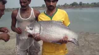Fishing In Pakistan By Khan Group With Malik Tahir 1