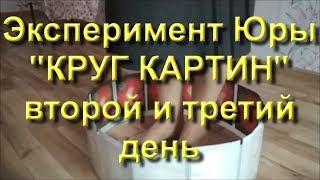 КОЛЬЦО КАРТИН. Эксперимент Юры, 2-й и 3-й день (29...