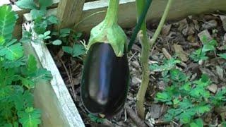Garden Update & Super Quick Garden Tip ~ Noreen's Garden