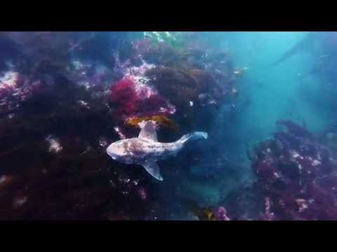 Spearfishing Apollo Bay
