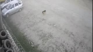 Собака помяла машину