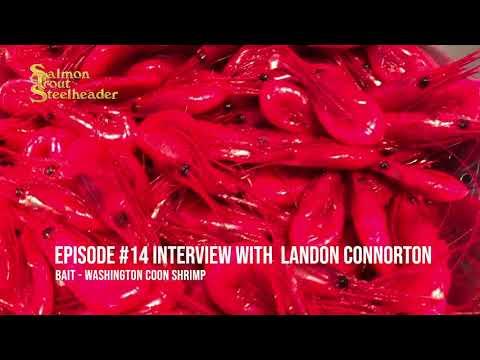 Washington Coon Shrimp W/ Landon Connorton   Salmon Trout Steelheader Podcast