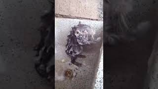 Baixar um rato tomar bano