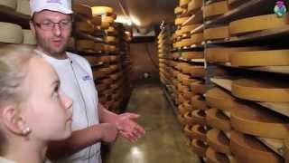 Le lait, de la vache au fromage