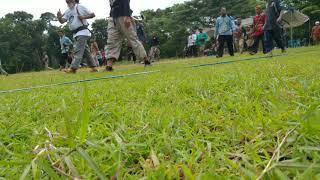 Event Panahan Tradisional Indonesia, Jember (Seleksi Fetih Kupasi Turky) #EventHorsebow