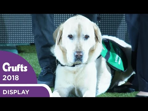 Dogs for Good Display | Crufts 2018